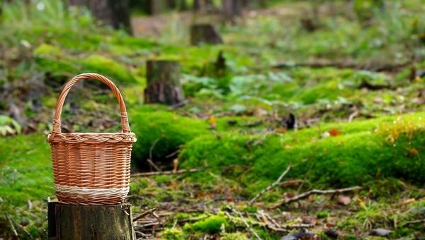 Что можно принести из леса в Подмосковье на этой неделе?