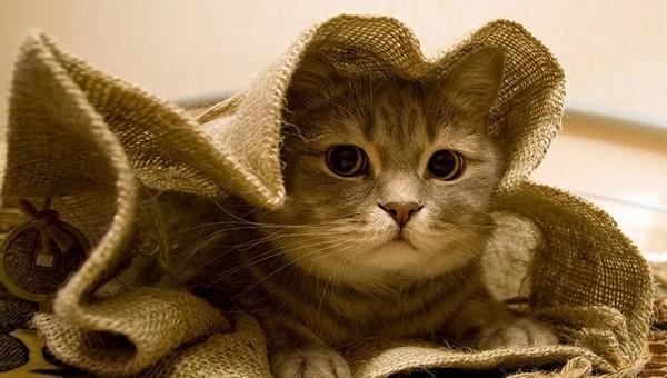 В Серпухове среди дня украли мешок...кошек