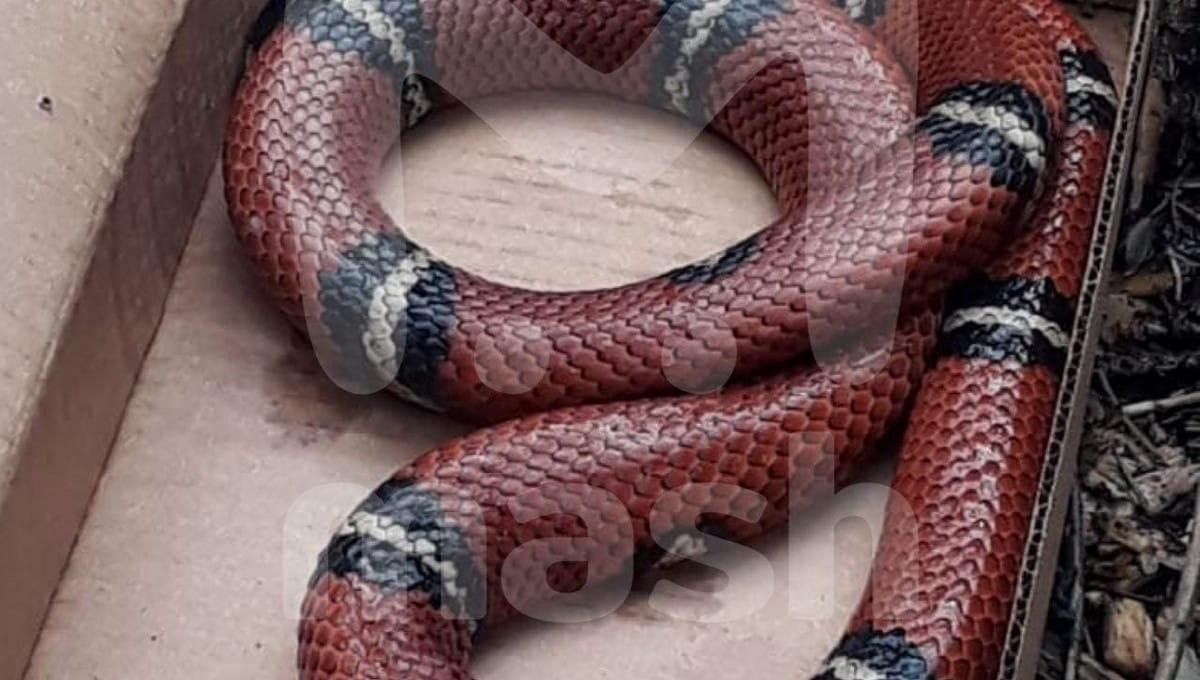 К детскому учреждению в Подмосковье подкинули огромную змею