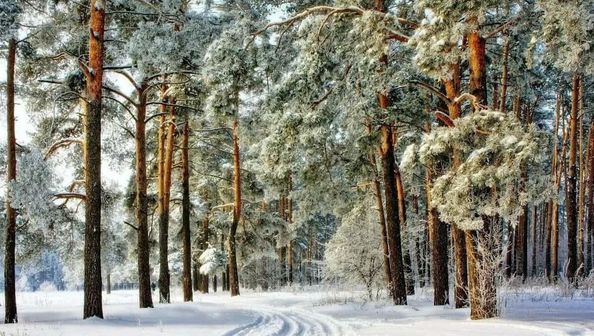 Жителей Подмосковья предупредили о последствиях оттепели