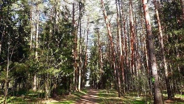 В лесу в Московской области найден труп