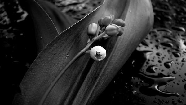 Цветущие в мае цветы могут убить человека