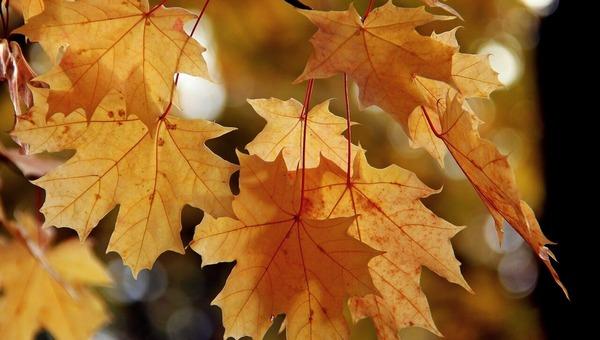 Метеорологи обещают в столичном регионе поздний листопад