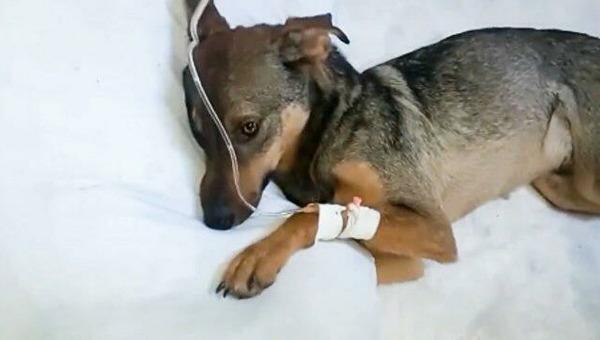 Собаки, погибшие в Чеховском приюте, были отравлены