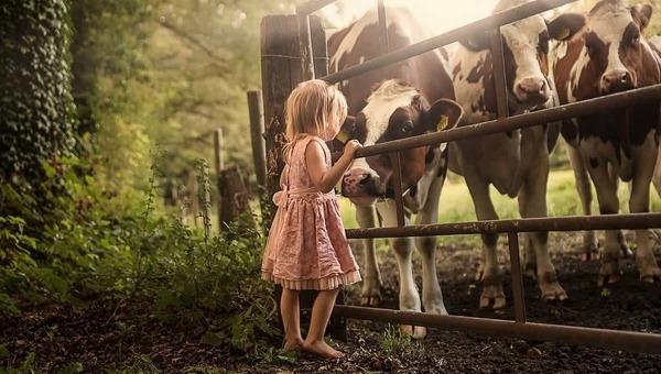 В Подмосковье корова забодала девочку