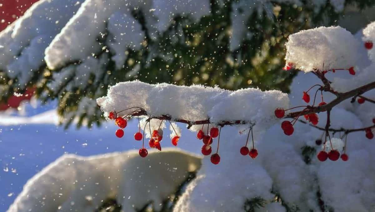 Подмосковье завалит снегом