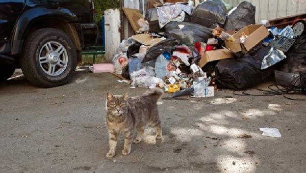 Молодой человек умер от сердечного приступа, пытаясь спасти кота