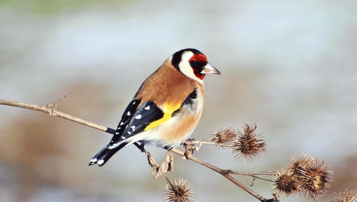 Музыкальные птицы появились в подмосковных лесах