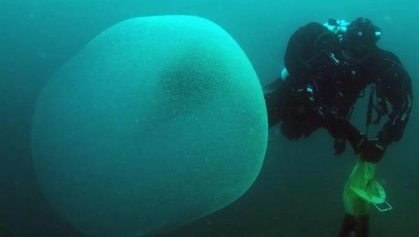 Раскрыта тайна загадочных желеобразных шаров с морского дна