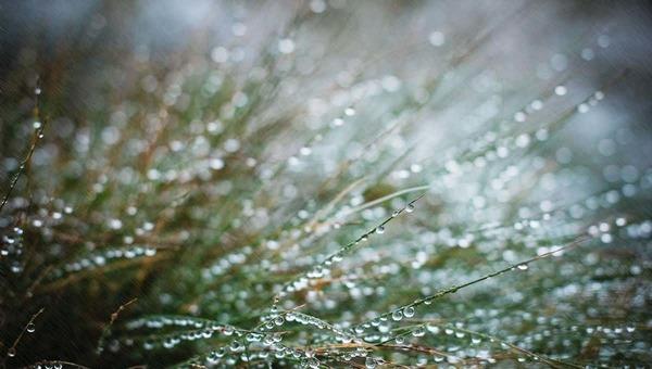 4 мая в Подмосковье синоптики прогнозируют не только дождь