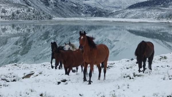 Российский полицейский расстрелял табун лошадей ради забавы