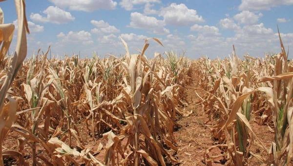 Несколько регионов России могут лишиться урожая
