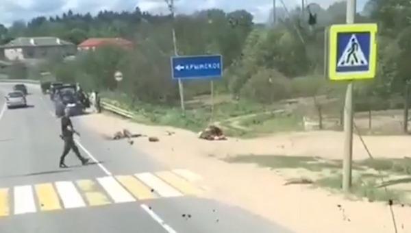 В Подмосковье двое скончались под колесами трактора
