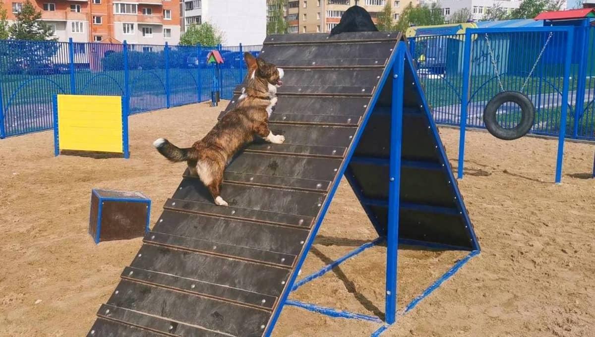 В Серпухове появится еще одна оборудованная площадка для собак
