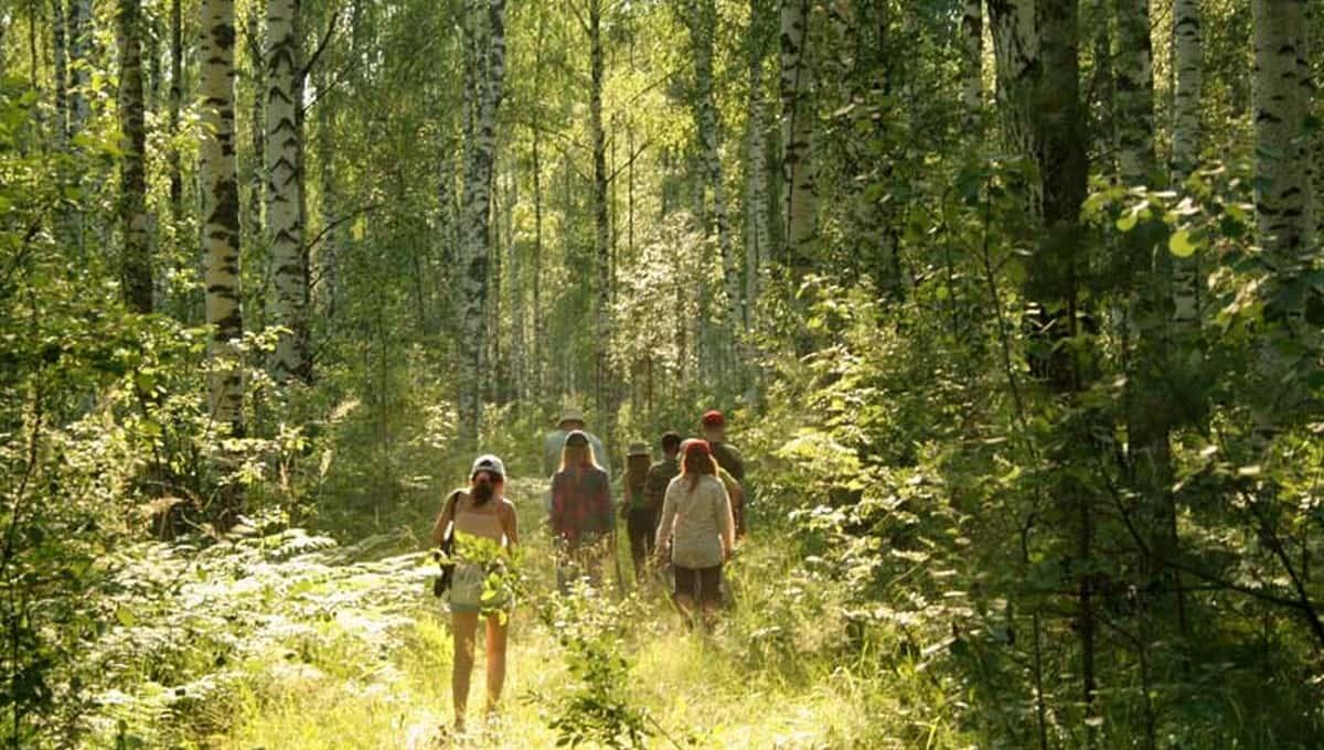Жители Подмосковья за сезон столкнулись с лесной опасностью уже 8 тысяч раз