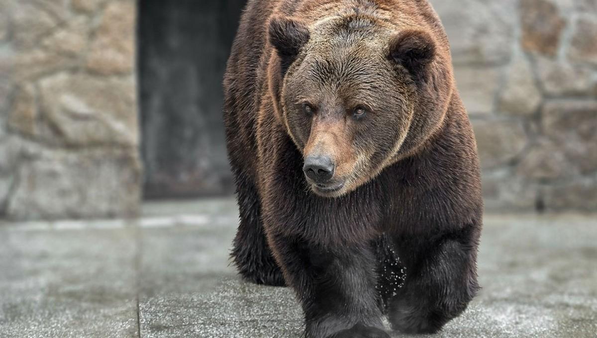 Трагедия случилась в одном из отечественных зоопарков