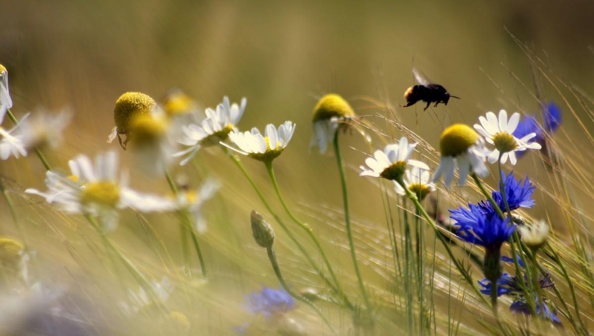 В Московской области объявлено предупреждение из-за агрессивных насекомых