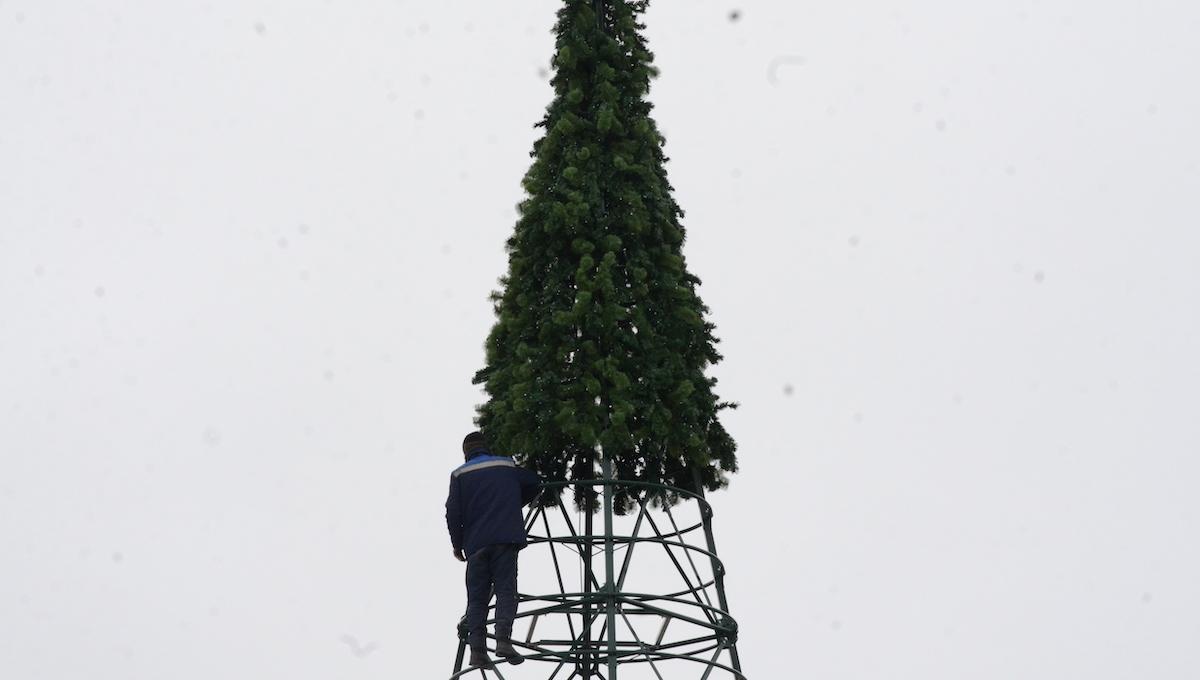 В Подмосковье установили первую... новогоднюю елку