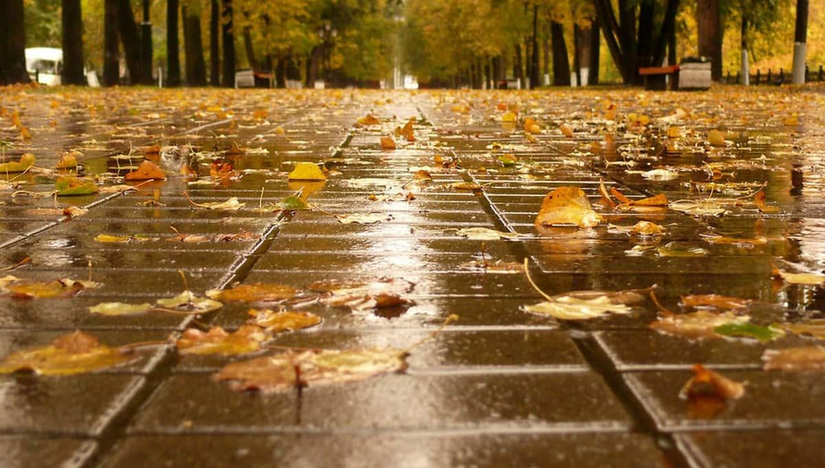 Синоптики сделали прогноз на сентябрь