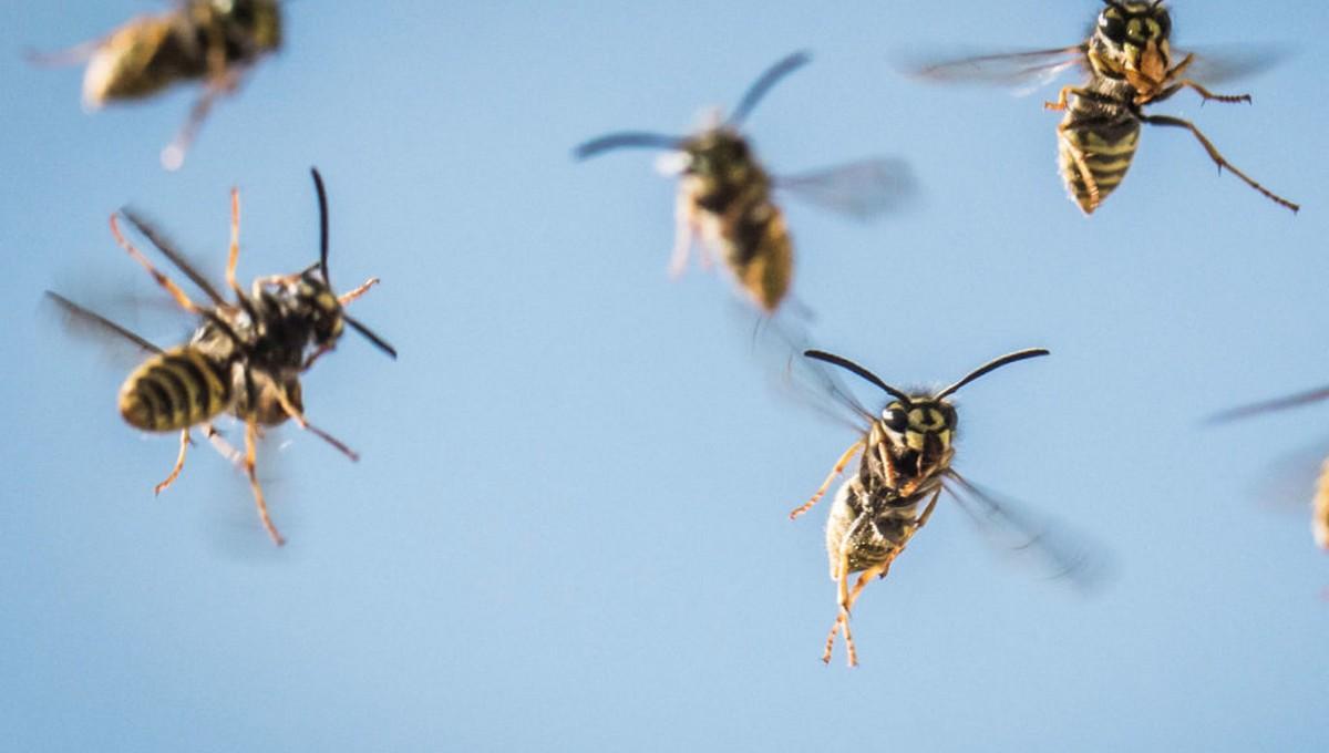 10-летняя девочка погибла на берегу Оки от укусов насекомых