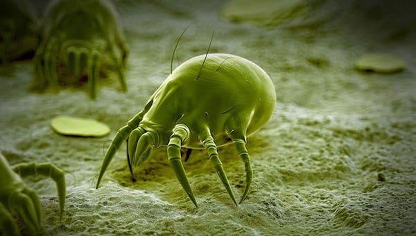 Как избавиться от паукообразных в постели?
