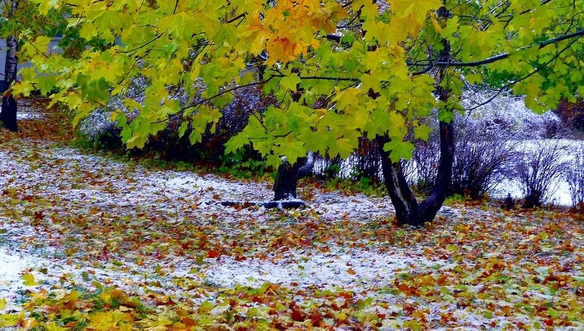 Метеорологи предупреждают: скоро выпадет снег