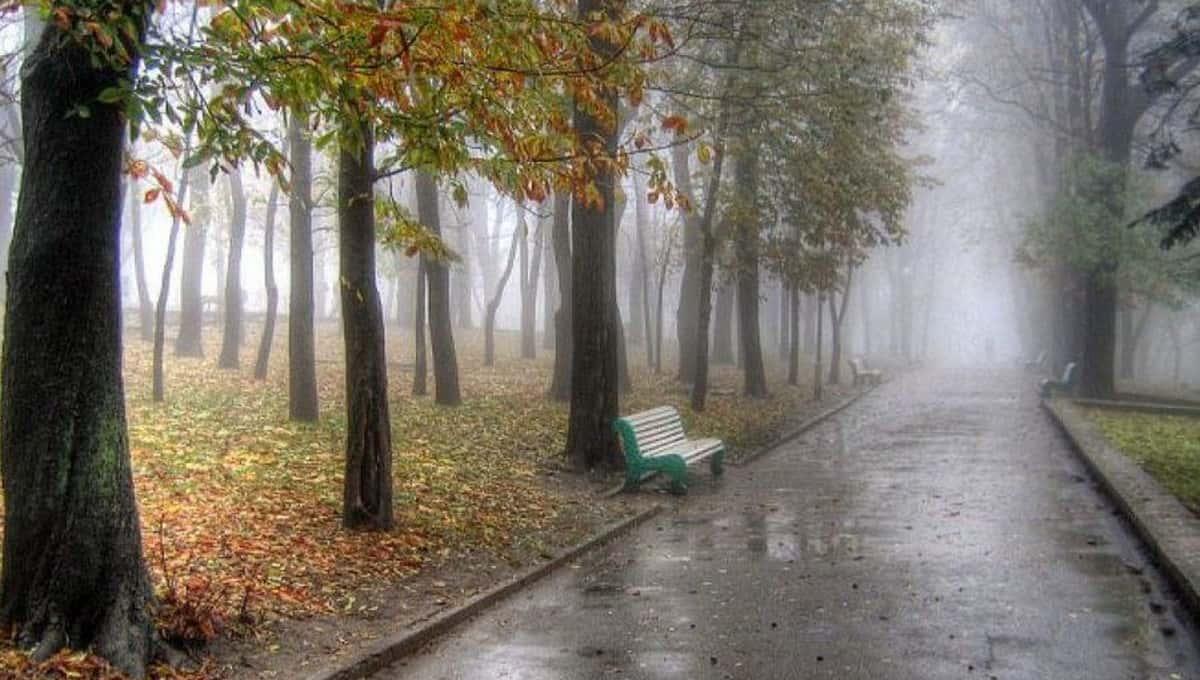 Какая погода ждет жителей Москвы и Подмосковья в пятницу?