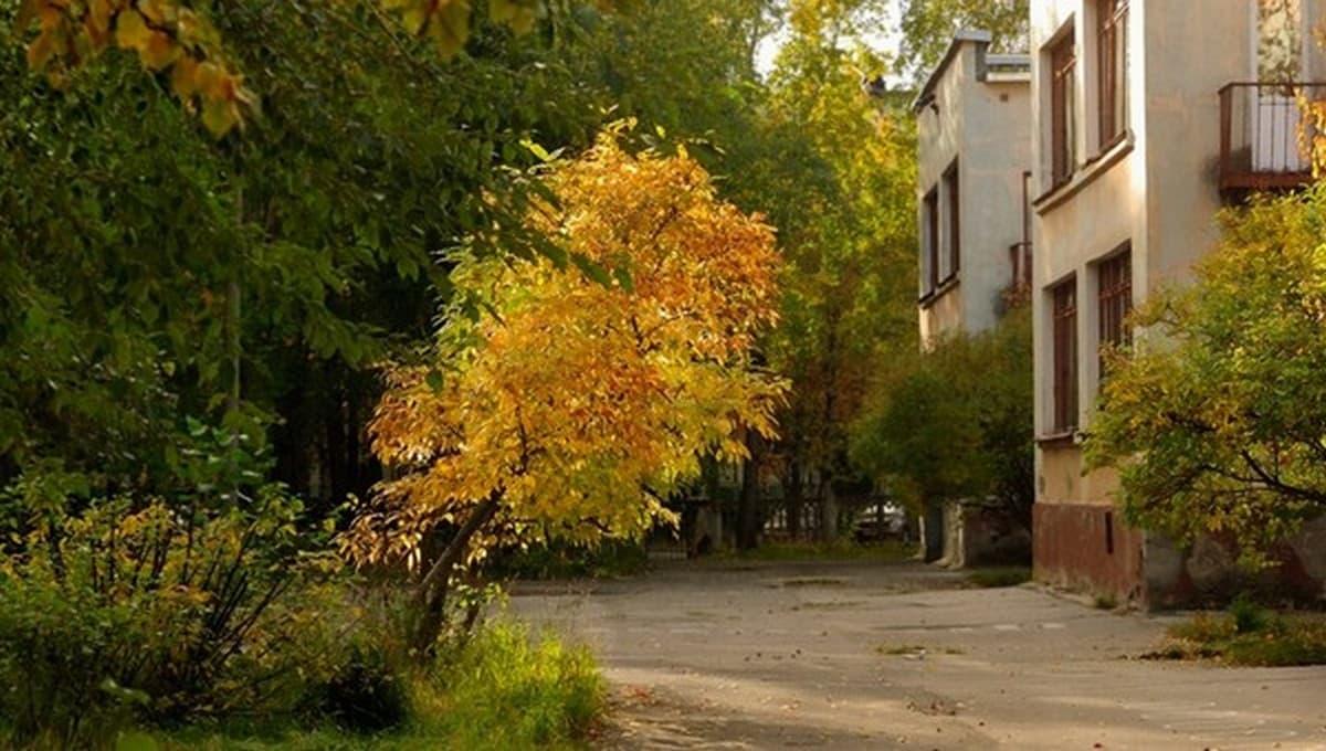 Сегодня по деревьям можно определить погоду на осень и зиму