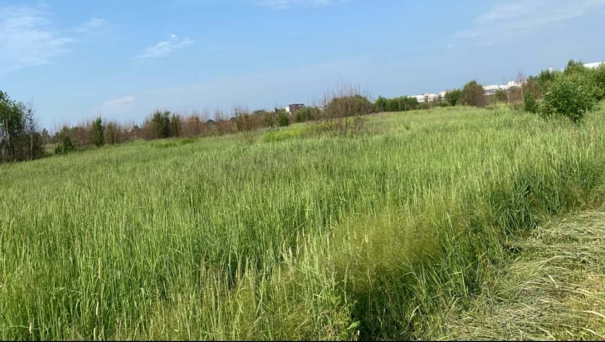 На большом пустыре в Серпухове хотят построить спортивный объект