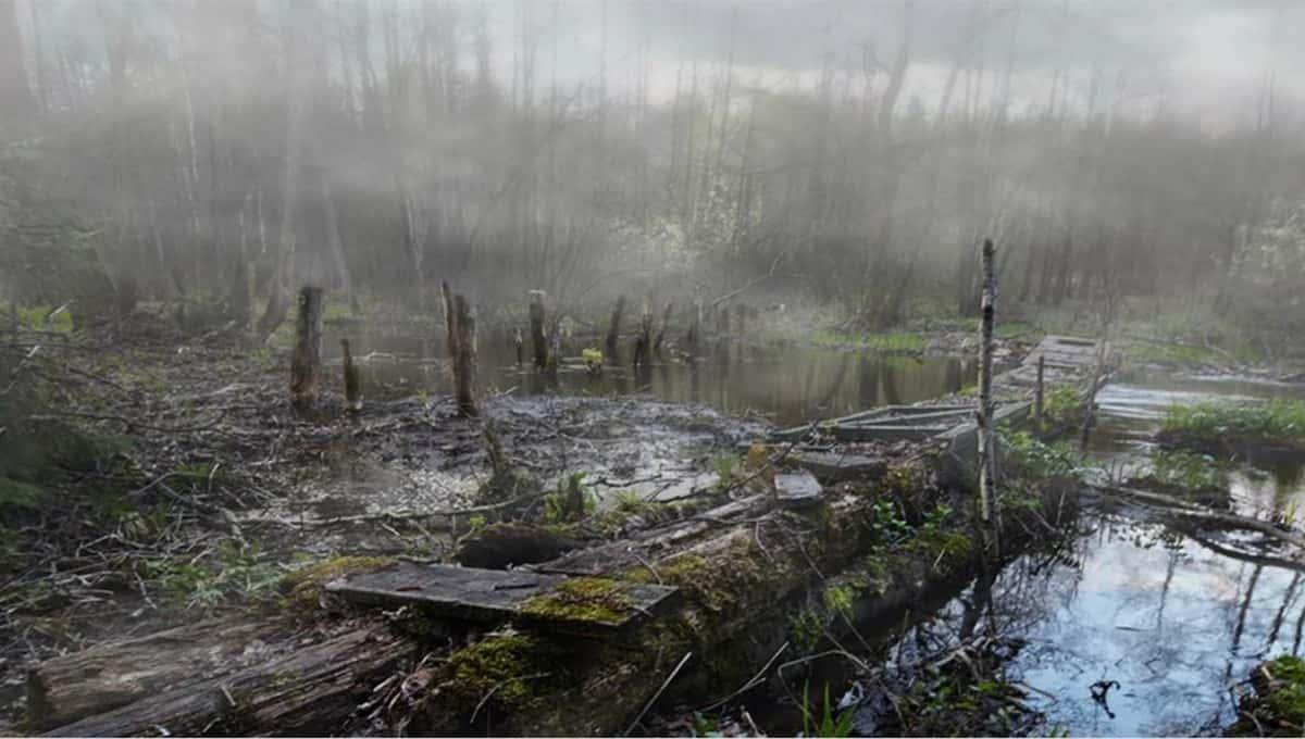 В России ищут человека, готового поселиться среди болот за 300 тысяч в месяц