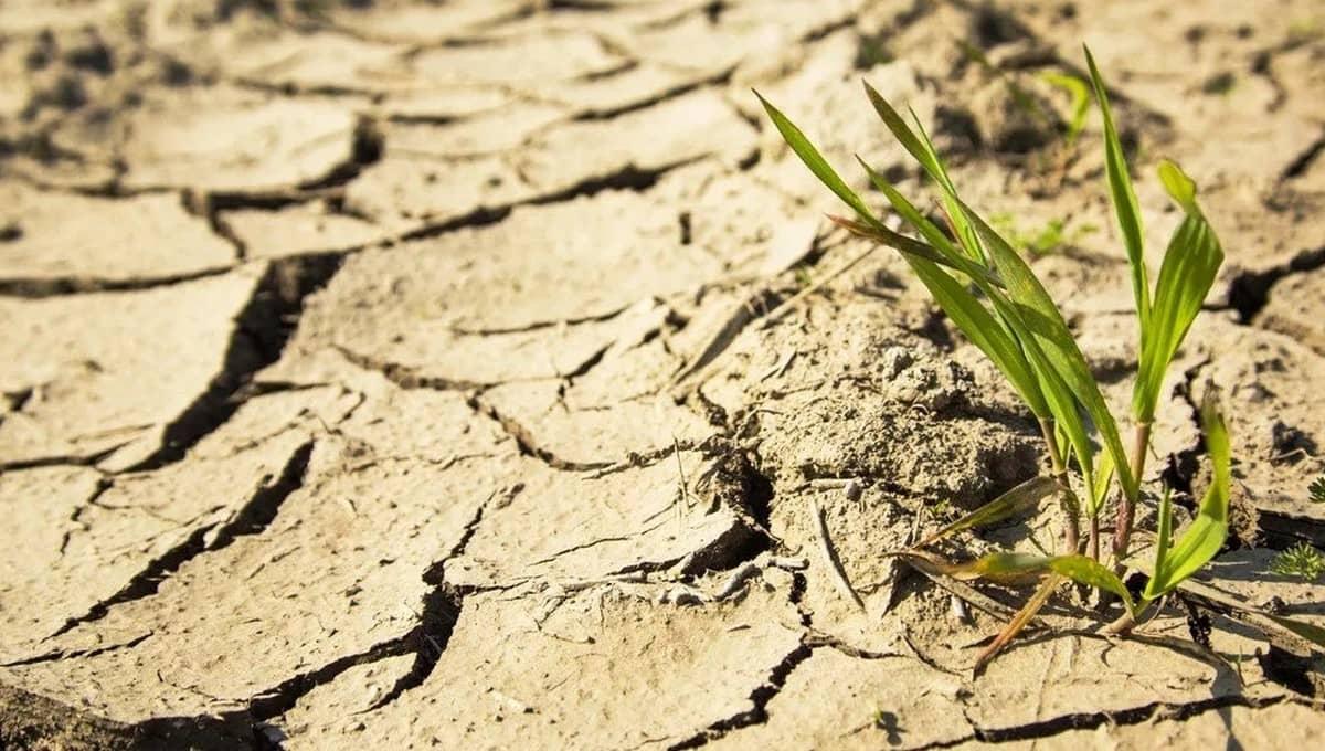 Синоптики пригрозили жителям столичного региона засухой