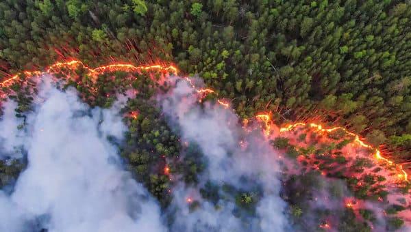 В стране сгорело рекордное количество леса