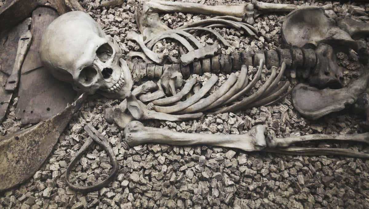 Скелетированные останки двоих людей обнаружили в Подмосковье