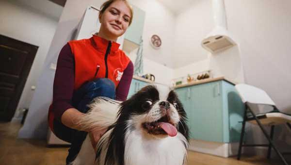 Лучшие услуги для ваших собак