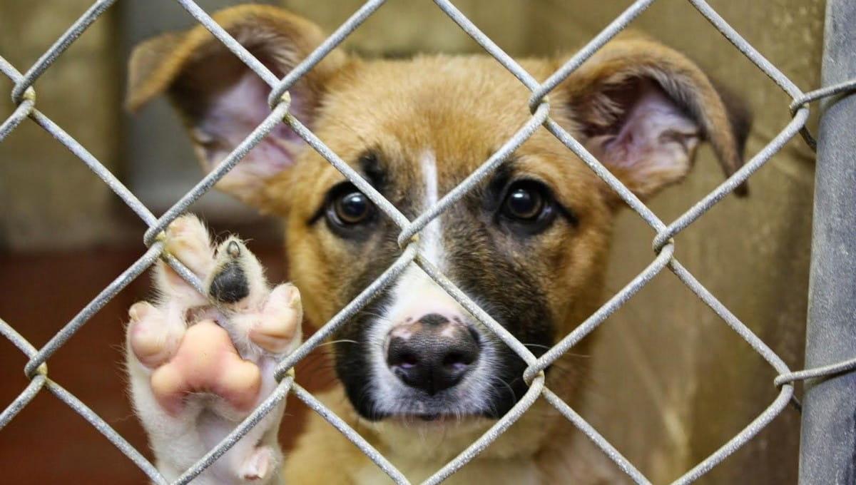 Приют для животных в Серпухове нуждается в крепких руках