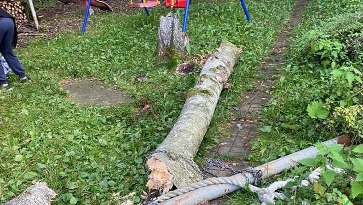 Две девочки пострадали после падения дерева в Новой Москве