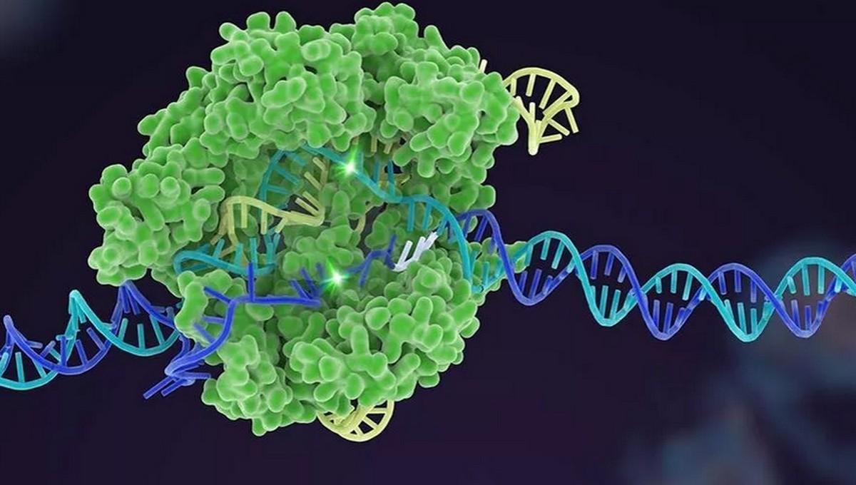 Ученые нашли новое средство, помогающее при лечении коронавируса