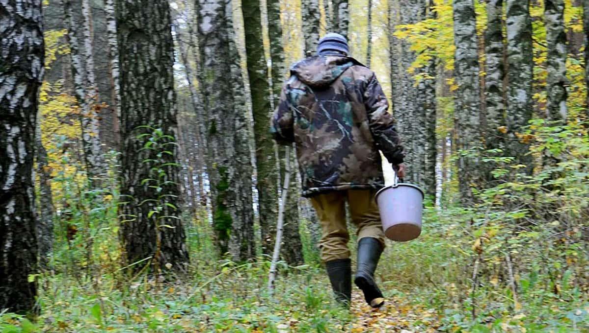 В лесах Подмосковья появились смертельные «ловушки»