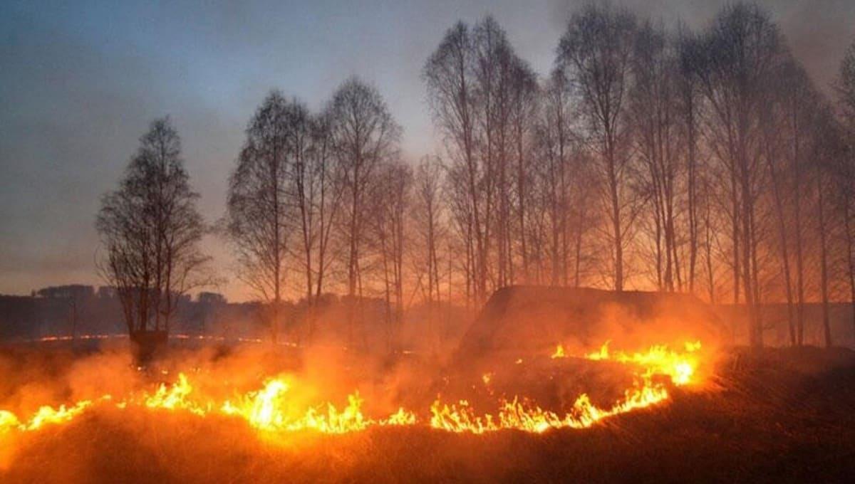 В Тульской области запретили въезд в леса и вдвое увеличили штрафы